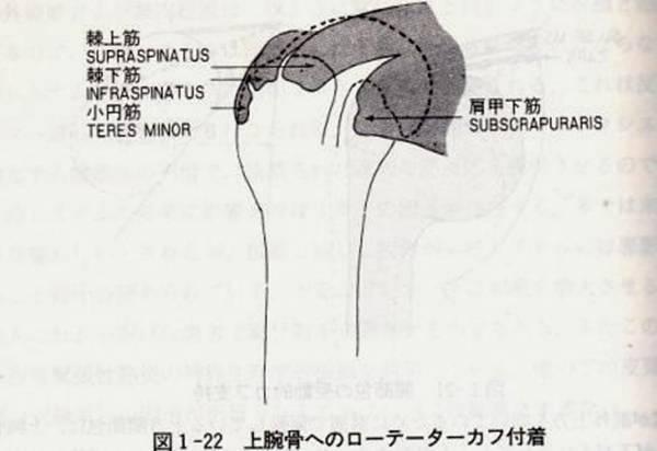 回旋筋腱板(ローテーターカフ)挫傷